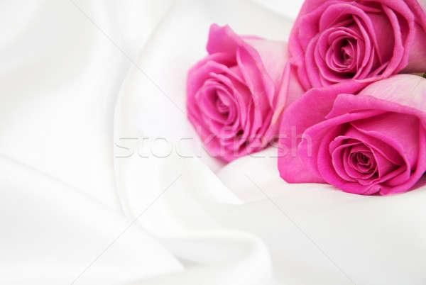 Rosas branco seda rosa flor flores Foto stock © almaje