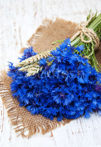 blue cornflowers Stock photo © almaje
