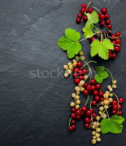 Rouge groseille laisse noir feuille fruits Photo stock © almaje