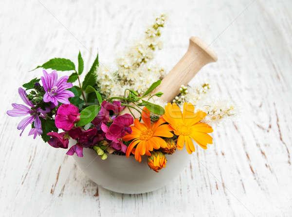 Flor silvestre hierba hoja madera blanco saludable Foto stock © almaje