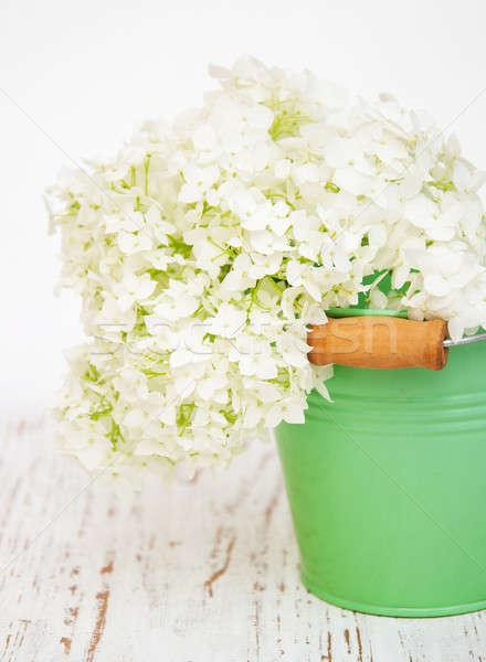 white hydrangea in a metal bucket Stock photo © almaje