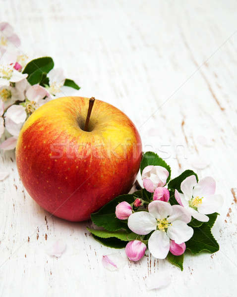 apple and apple tree blossoms Stock photo © almaje