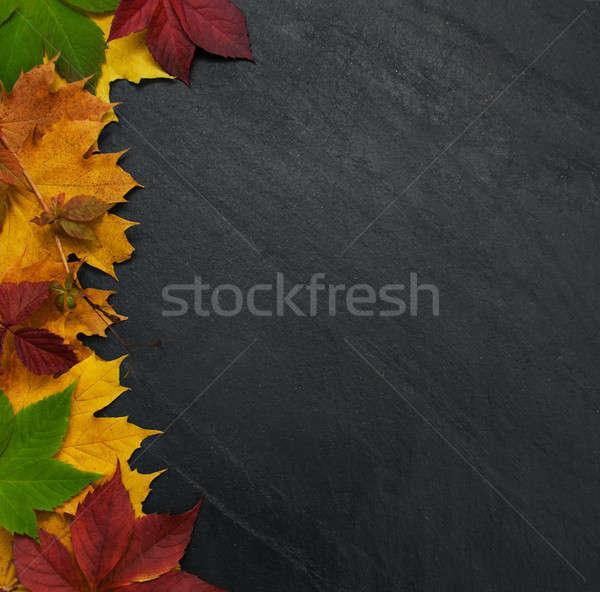 Lousa quadro cair colorido folhas Foto stock © almaje