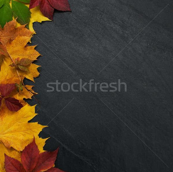 Blackboard frame vallen kleurrijk bladeren Stockfoto © almaje