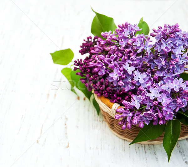 Liliowy kwiaty starych wiosną drewna Zdjęcia stock © almaje