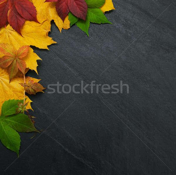 Sonbahar yaprakları tahta çerçeve düşmek renkli yaprakları Stok fotoğraf © almaje
