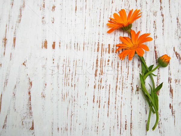 Calendula flowers  Stock photo © almaje