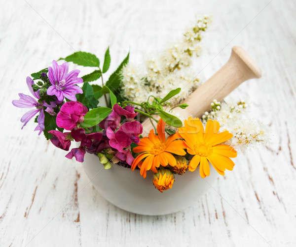 Flor silvestre hierba hoja medicina planta blanco Foto stock © almaje