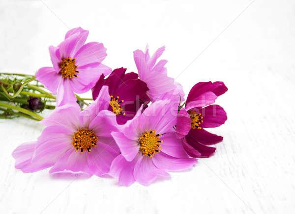 Cosmos flowers Stock photo © almaje