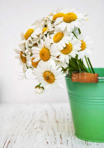ромашка цветы зеленый ковша старые Сток-фото © almaje