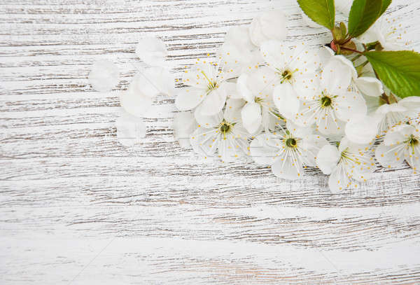Primavera flor de cerezo edad textura hoja Foto stock © almaje