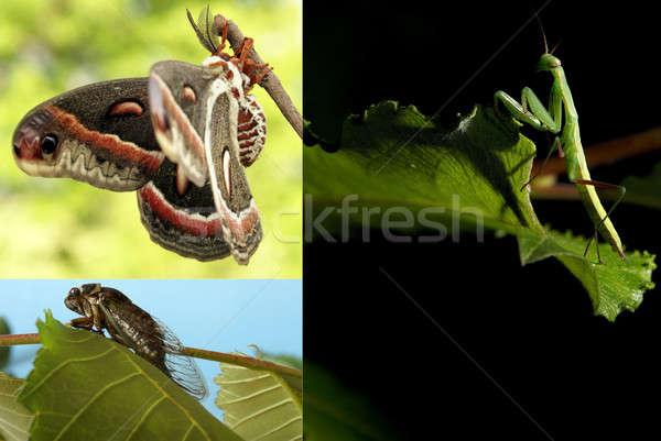 Bug collage pochi diverso estate stagione Foto d'archivio © AlphaBaby