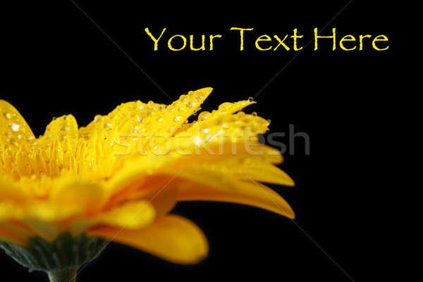 Trillend nat Geel mooie Stockfoto © AlphaBaby