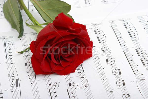 Amour musique Rose Red note fleur piano Photo stock © AlphaBaby