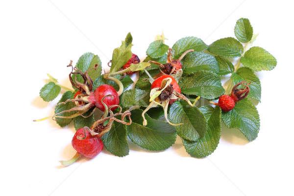 Rose Buds Seasonal Stock photo © AlphaBaby
