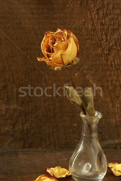 Secas tiro rosa vaso Foto stock © AlphaBaby