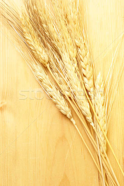 Bearded Wheat Stock photo © AlphaBaby