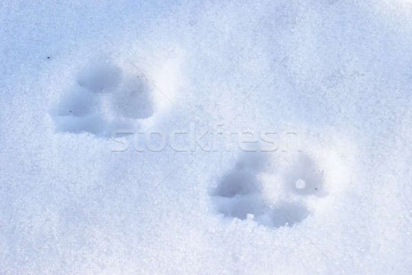 Winter hond ingesteld sneeuw natuur print Stockfoto © AlphaBaby