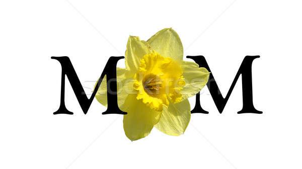 Poder flor mamãe fora inglês Foto stock © AlphaBaby