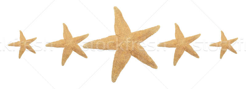 Five Starfish Rating Stock photo © AlphaBaby