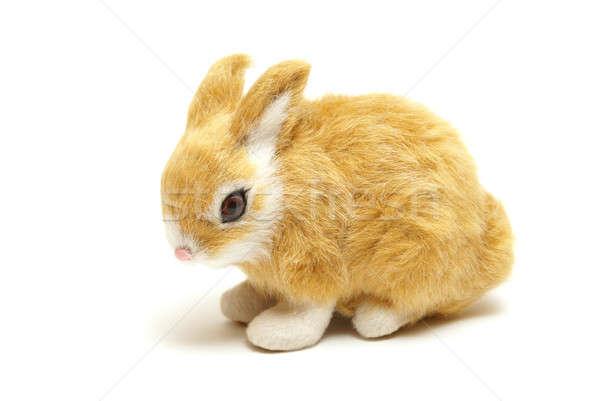 Bunny Stock photo © AlphaBaby
