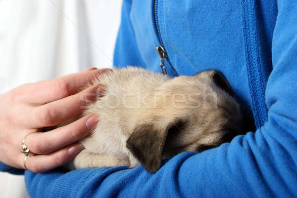 Embracing Newborn Pug Puppy Stock photo © AlphaBaby