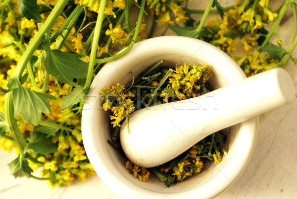 Yellow Rocketcress Herbs Stock photo © AlphaBaby