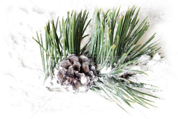 Snowy Pine Cone Stock photo © AlphaBaby