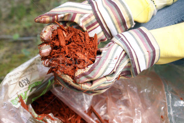 Gardening with Red Mulch Stock photo © AlphaBaby