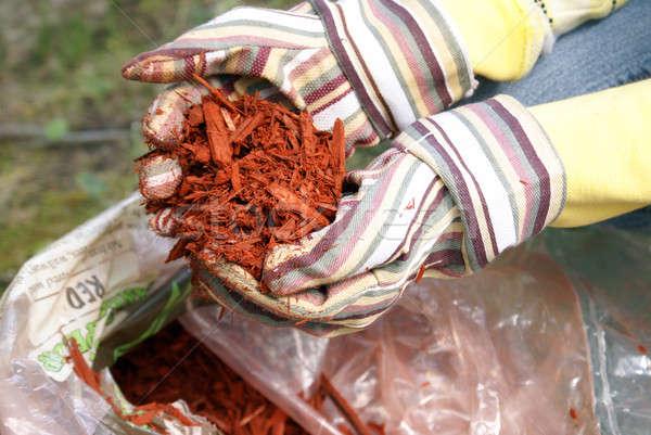 Tuinieren Rood tuinman hand vol voorjaar Stockfoto © AlphaBaby