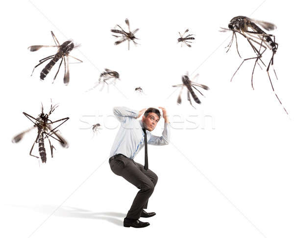 Mosquitoes attack Stock photo © alphaspirit