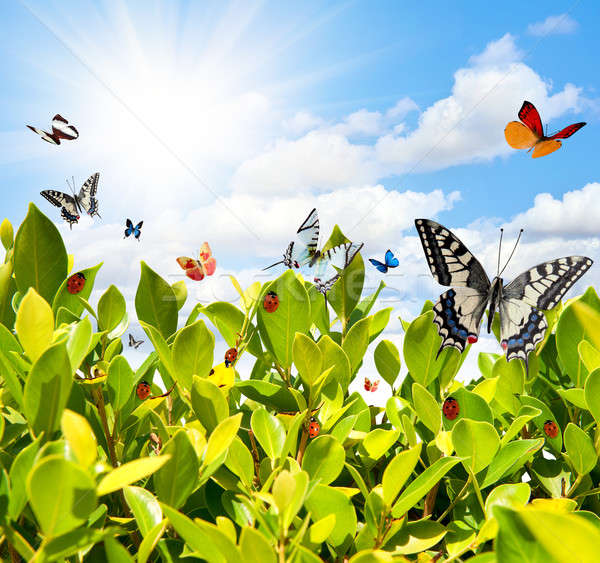 Borboleta joaninha folha verde primavera folha fundo Foto stock © alphaspirit