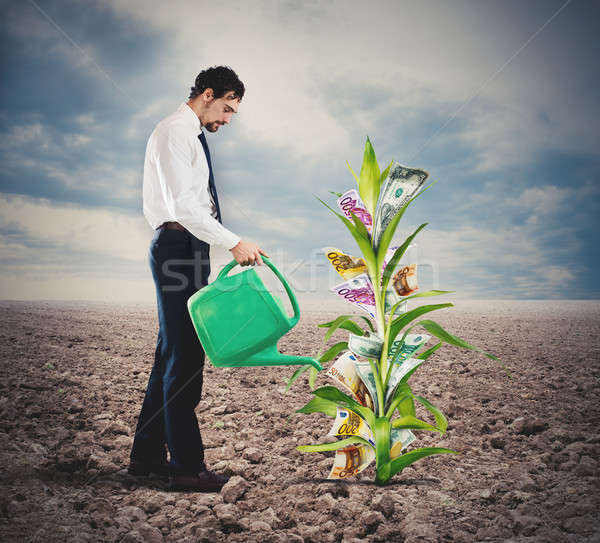Businessman watering money plant Stock photo © alphaspirit