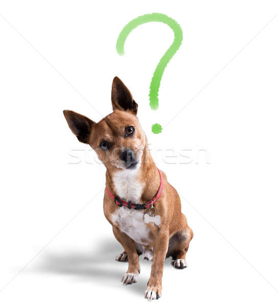 Dog with quizzical expression Stock photo © alphaspirit