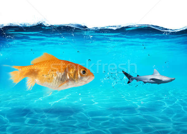 Groß Goldfisch Angst Hai Ozean tief Stock foto © alphaspirit