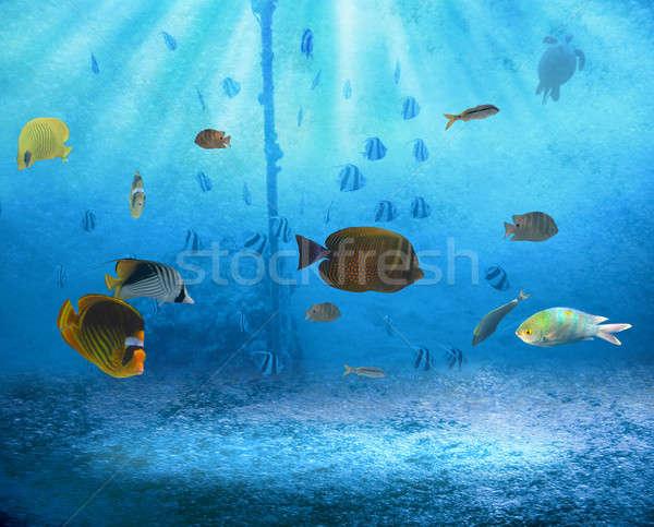 тропические рыбы тропические воды рыбы свет морем Сток-фото © alphaspirit