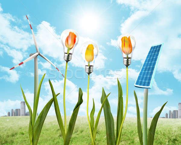 ветер энергии Чистая энергия цветок пейзаж Сток-фото © alphaspirit