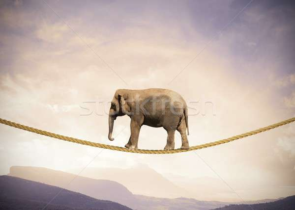 Elephant on a rope Stock photo © alphaspirit