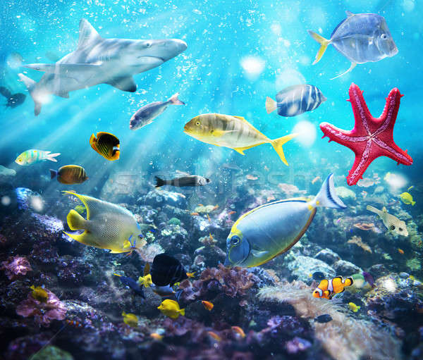 Marine life Stock photo © alphaspirit