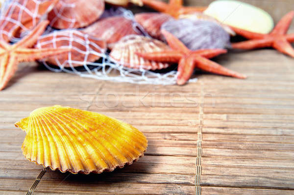 Shell starfish marine texture legno natura Foto d'archivio © alphaspirit