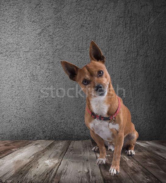 Psa podpisania zabawy funny zwierząt Zdjęcia stock © alphaspirit