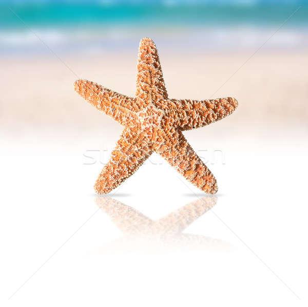 Starfish Stock photo © alphaspirit
