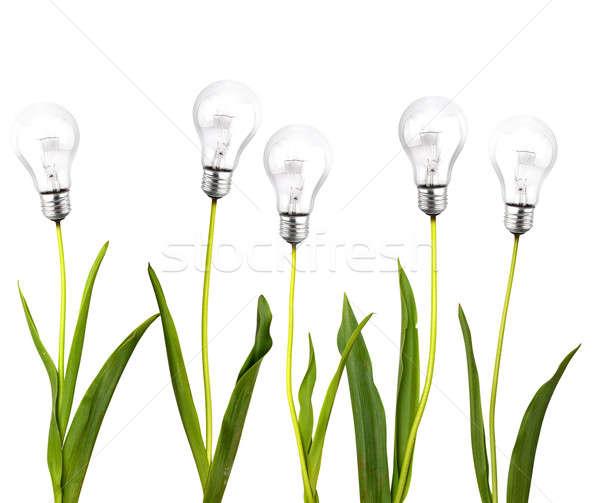 Green idea concept Stock photo © alphaspirit