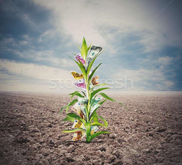 Geld groeiend plant bladeren business Stockfoto © alphaspirit