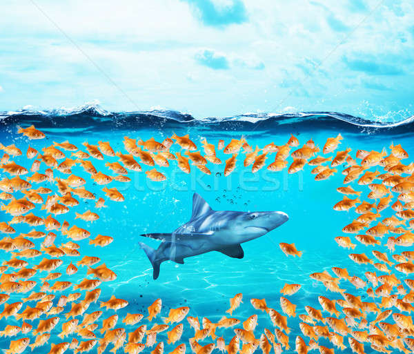 Goldfishes group surround the shark. Concept of unity is strenght,teamwork and partnership Stock photo © alphaspirit