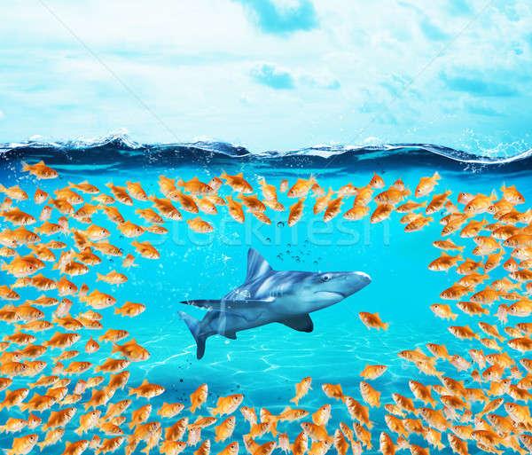 Groep haai eenheid groot teamwerk Stockfoto © alphaspirit