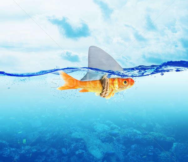 Red Fish  as shark Stock photo © alphaspirit