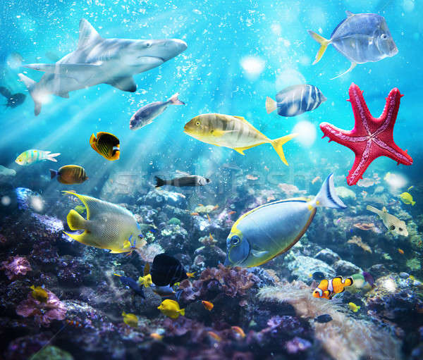 Marine life Stock photo © alphaspirit