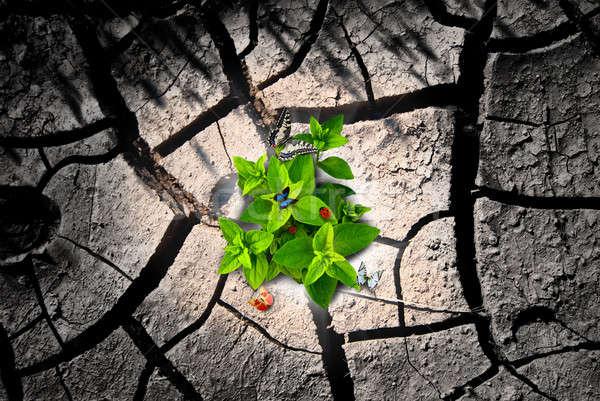 Arid ground and green Stock photo © alphaspirit