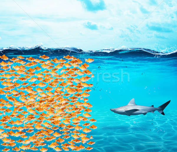 Goldfishes group make a wall against the shark. Concept of unity is strenght, teamwork and partnersh Stock photo © alphaspirit